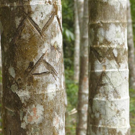 marques d'appropriation_Abatia_Timor